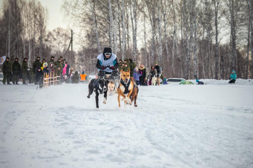 Каюр из Братска выиграл ежегодный этап гонки на упряжках «Сила Сибири-2019»