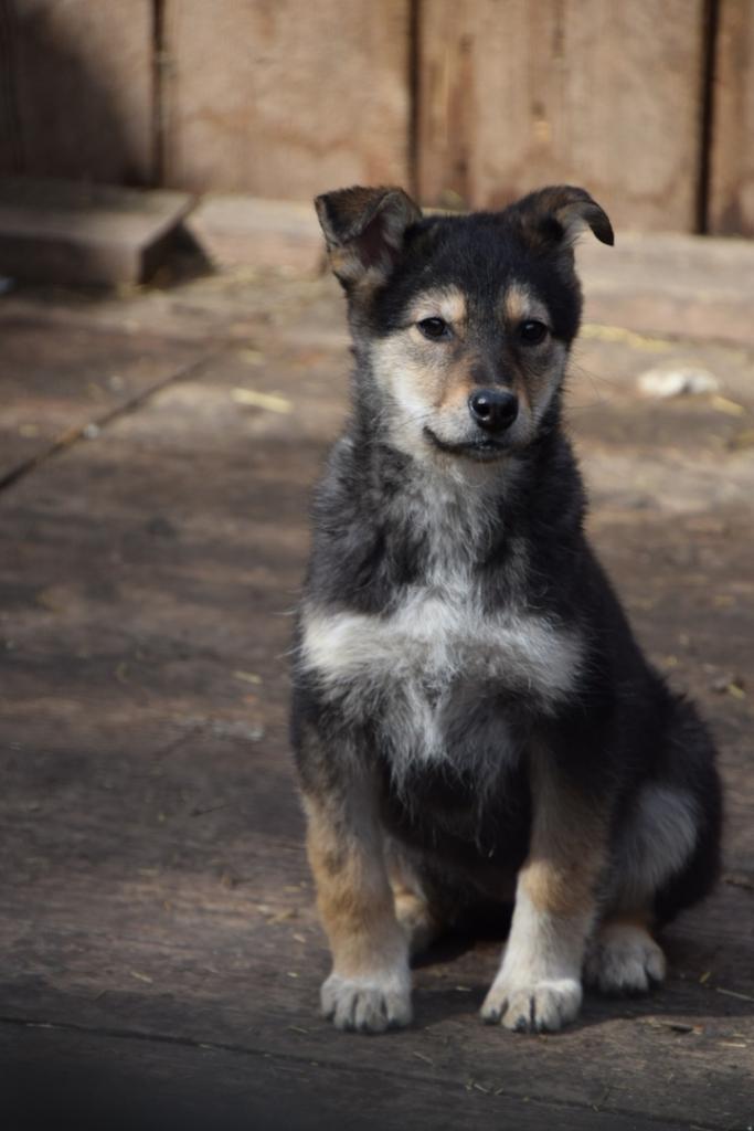 Собачья радость. В устьилимском приюте для животных «Хатико» всегда ждут гостей (фото)
