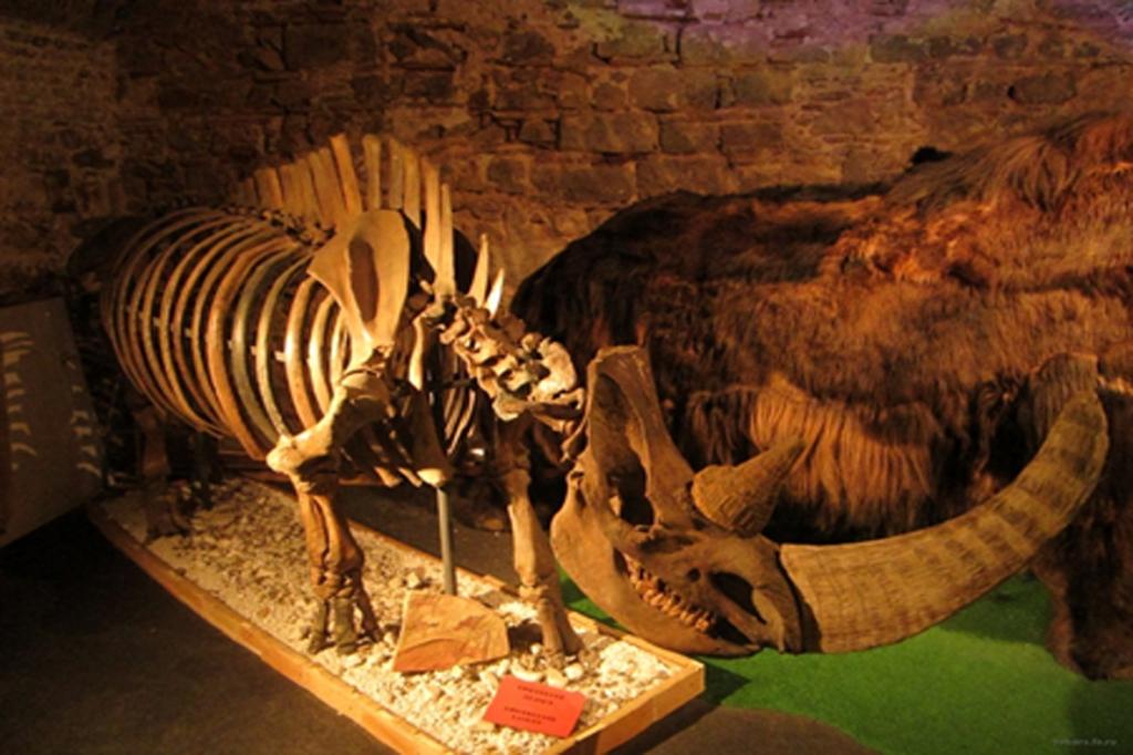 В экспедицию за мамонтом и пещерным львом