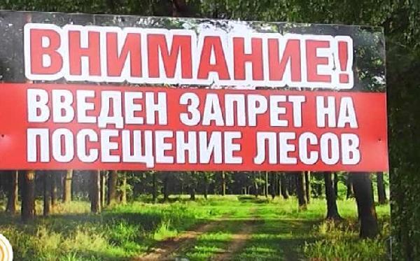 В Усть-Илимском районе выявлены факты продажи поддельных «пропусков ЧС» для проезда в лес