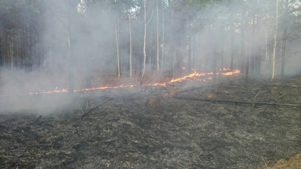 Тревожная обстановка. Из-за лесных пожаров в Усть-Илимском районе ввели режим «Чрезвычайная ситуация»