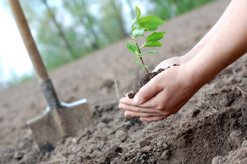 «Таежный город, любимый город». Устьилимцев приглашают принять участие в городской акции по посадке деревьев