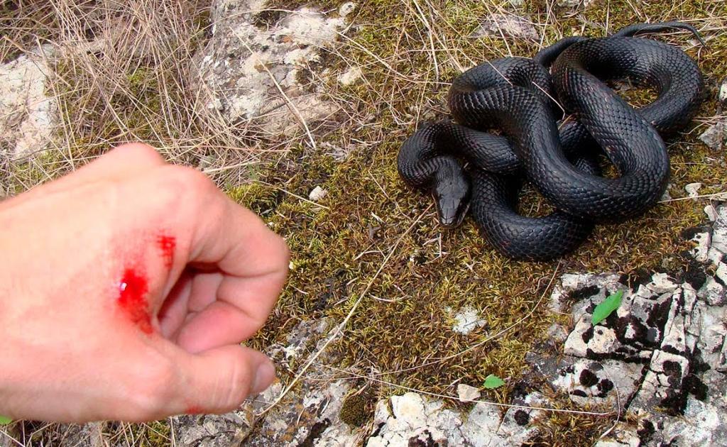 Осторожно, змеи! В Усть-Илимске зарегистрирован случай укуса человека гадюкой
