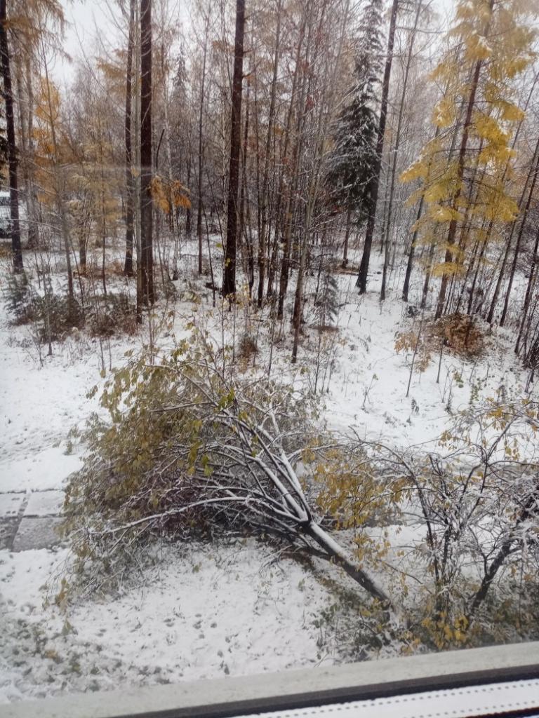 Последствия стихии. В ночь на 1 октября на Усть-Илимск буквально обрушился снегопад (фото)