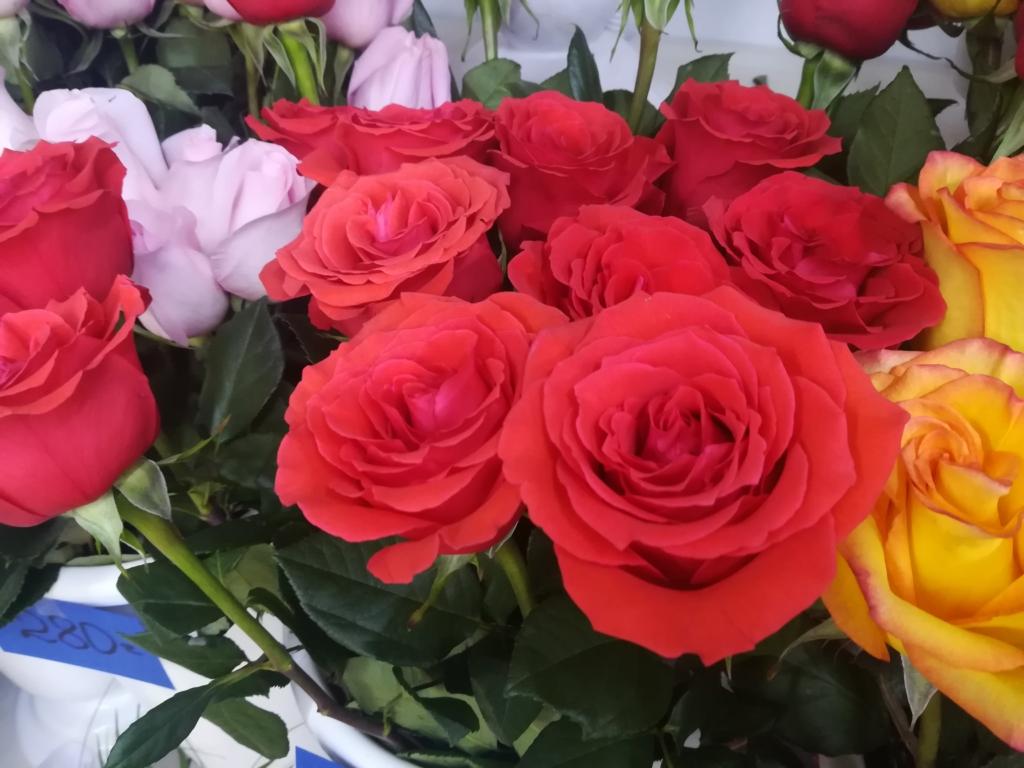 Миллион, миллион, миллион... Весна - время года, когда прекрасная половина человечества утопает в море цветов
