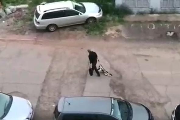 Не оставаться равнодушными. В Братске в полицию обратились жильцы одного из домов с просьбой расследовать дело о гибели собаки