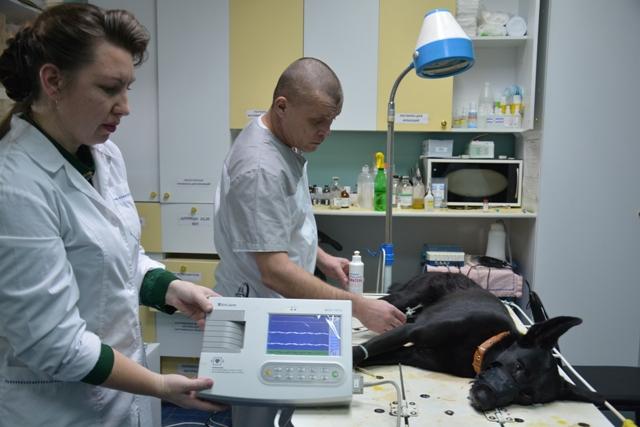 Становится все больше! В Усть-Илимске насчитали 253 собаки и 71 кошку без владельцев