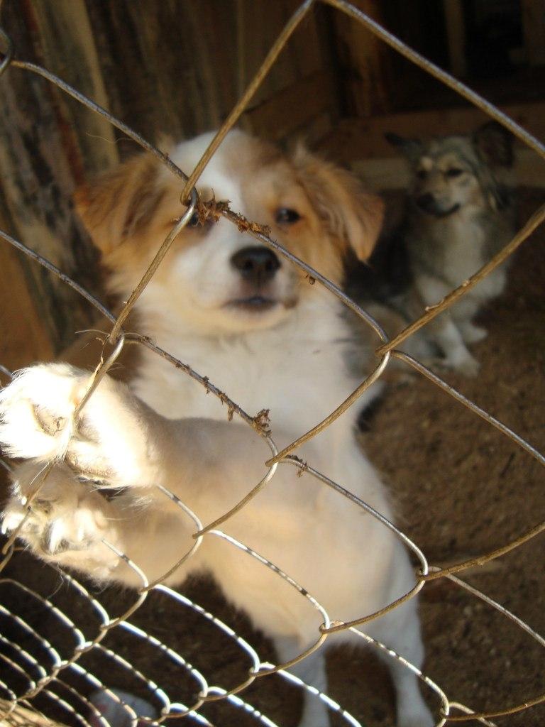 День бездомных животных. Устьилимцев приглашают принять участие в акции