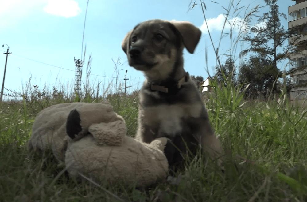 Волонтеры братского приюта для животных спасли собаку из ямы