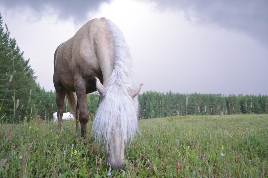 Верховой езде все возрасты покорны. Устьилимцы старше 55 лет могут принять участие в бесплатных конных походах